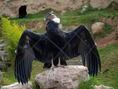 Mirador El Lechere i Parque Condor